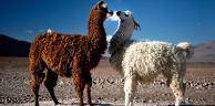 Sur les routes des joyaux andins