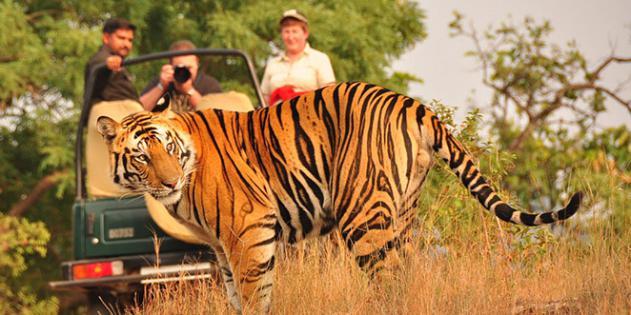 Rajasthan & parc de Ranthambore